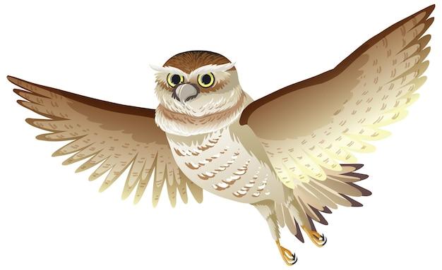 Ptak sowa w latającej pozie na białym tle