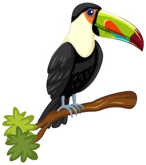 Ptak tukan na gałęzi na białym tle