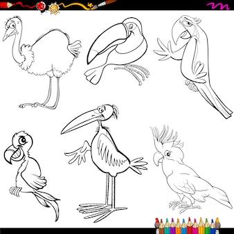 Ptaki kolorowanki