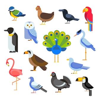 Ptaki wektor zestaw ilustracji na białym tle