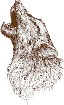 Puentylizm rysunek wilka