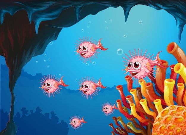 Puffer ryby wewnątrz jaskini morskiej