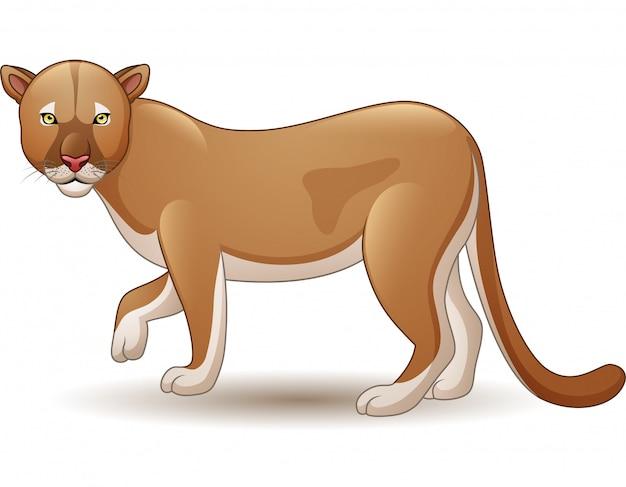 Puma odizolowywająca na białym tle