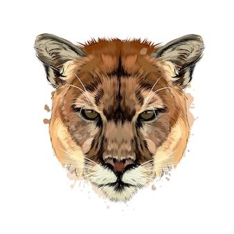Puma, portret głowy pumy z plusku akwareli, kolorowy rysunek.