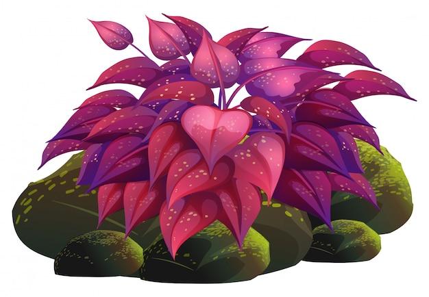 Purpury liście i skały na bielu