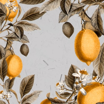 Pusta karta drzewa cytrynowego