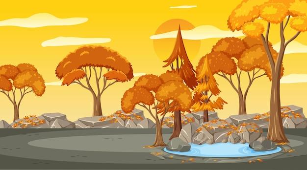 Pusta scena parkowa o zachodzie słońca z wieloma drzewami