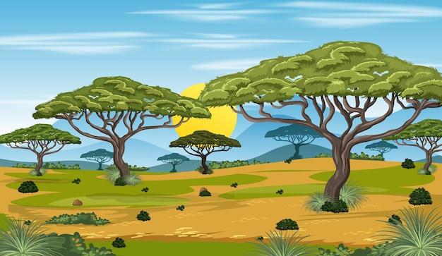 Pusta scena przyrody lasu krajobraz z wieloma drzewami