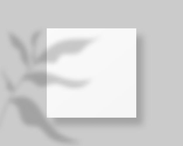 Pusty biały papier z cieniem liścia. pusty papier z nakładką cienia. . szablon