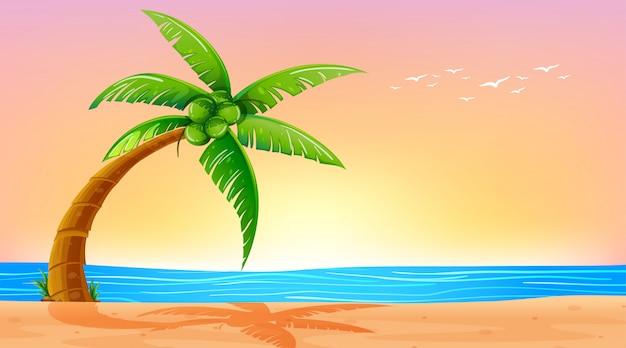 Pusty natury plaży oceanu nabrzeżny krajobraz