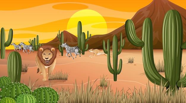 Pustynny las krajobraz na scenie czasu zachodu słońca