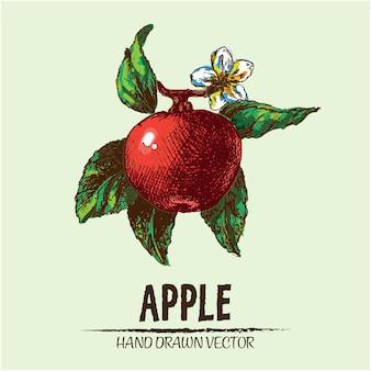 R? cznie narysowane jab? ko tle