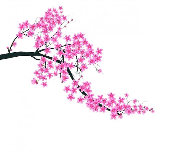 Rama akwarela sakura. tło z gałąź kwiat wiśni.