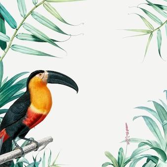 Rama tropikalnej papugi
