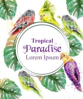 Rama tropikalny raj