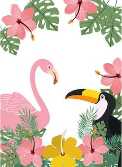 Rama tucan i flamandzki z letnimi kwiatami