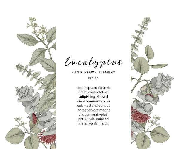 Ramka botaniczna eukaliptusa z przykładowym szablonem tekstowym