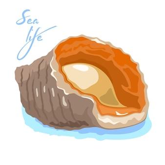 Rapana venosa lub trąbik żyłkowany to duży drapieżny ślimak morski