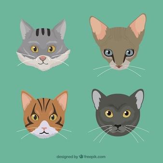 Rasy kotów spakować