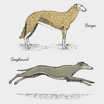 Rasy psów grawerowane, ręcznie rysowane ilustracja w stylu drzeworytu