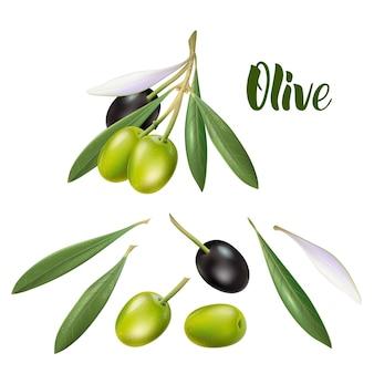 Realistyczna gałązka oliwna ilustracja 3d do plakatów reklamowych, pocztówek, etykiet