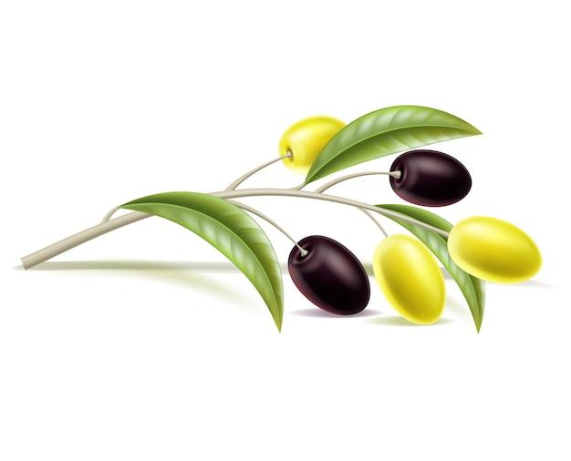 Realistyczna gałązka oliwna z liśćmi, jagoda