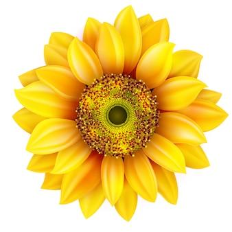 Realistyczna ilustracja słonecznika.