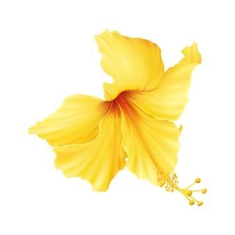 Realistyczna ilustracja z pięknym żółtym kwiatem hibiskusa na białym