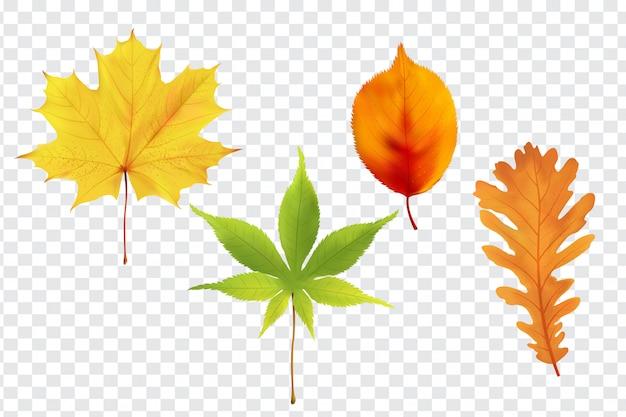 Realistyczna kolekcja jesiennych liści leśnych