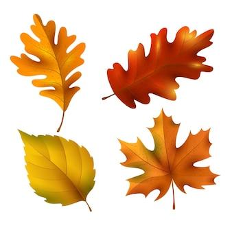 Realistyczna kolekcja jesiennych liści