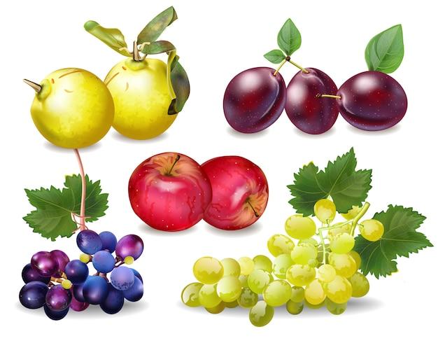 Realistyczna kolekcja jesiennych owoców