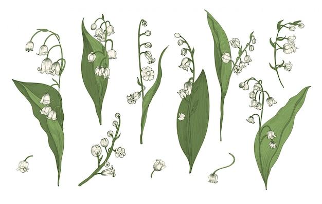 Realistyczna kolekcja konwalii. ręcznie rysowane zestaw pąków, liści i łodyg. kolorowa ilustracja.