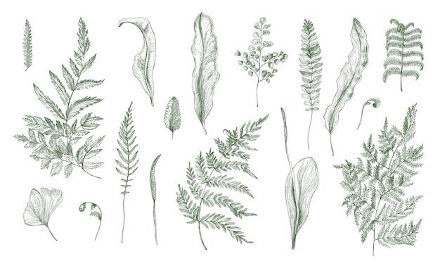 Realistyczna kolekcja paproci. ręcznie rysowane zestaw kiełków, liści, liści i łodyg. czarno-biała ilustracja.