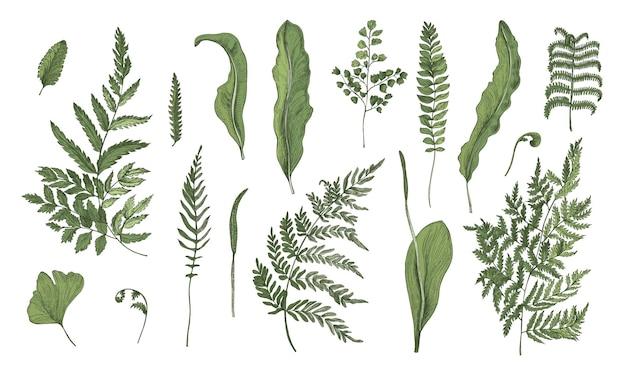 Realistyczna kolekcja paproci. ręcznie rysowane zestaw kiełków, liści, liści i łodyg.