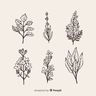 Realistyczna kolekcja ręcznie rysowane kwiaty