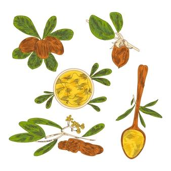 Realistyczna kolekcja ręcznie rysowanych elementów jojoba