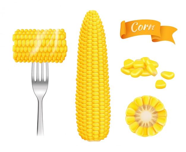 Realistyczna kukurydza. zbierać świeże cięcie ziarna je kukurydzanego wektorowego szablon