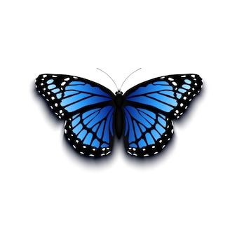 Realistyczna motylia ikona na białym tle.
