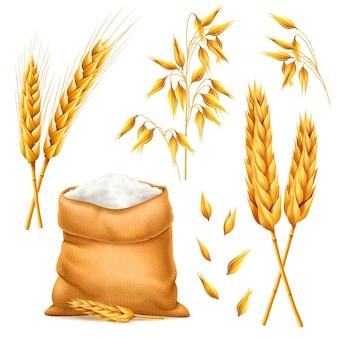 Realistyczna pęczek pszenicy, owsa lub jęczmienia z workiem mąki