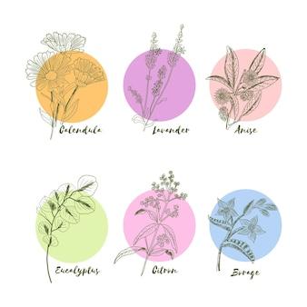Realistyczna, ręcznie rysowana kolekcja ziół olejków eterycznych