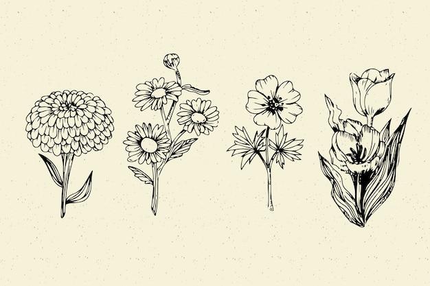 Realistyczna ręcznie rysowane kolekcja botanika vintage kwiat