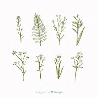 Realistyczna ręcznie rysowane kolekcja kwiatów botanicznych