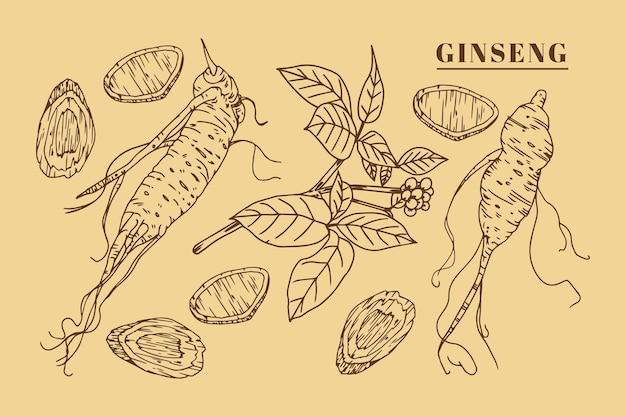 Realistyczna ręcznie rysowane kolekcja żeń-szenia roślin