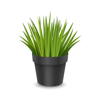 Realistyczna roślina doniczkowa w doniczce