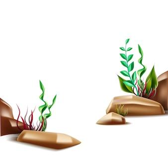 Realistyczna scena podwodnego życia na dnie morza z roślinami i kamieniami w tle