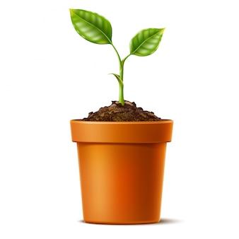 Realistyczna zielona sadzonka rośnie w glebie w doniczce ceramicznej