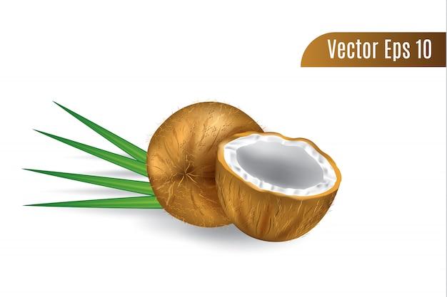 Realistyczne 3d wektor brązowy kokos na białym tle