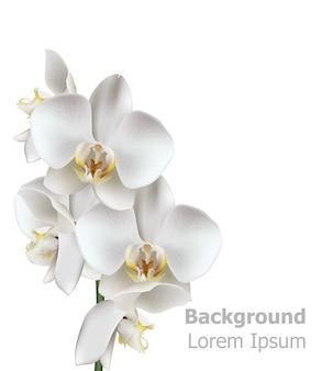 Realistyczne białe kwiaty orchidei