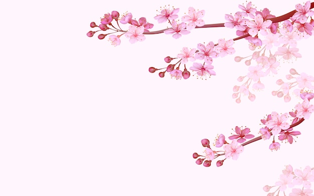 Realistyczne chińskie różowe sakura tło na tle miękkiej róży. orientalny wzór kwiat kwitnąć wiosną tło. 3d charakter tło ilustracja