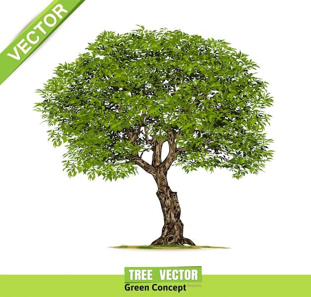 Realistyczne drzewa na białym tle